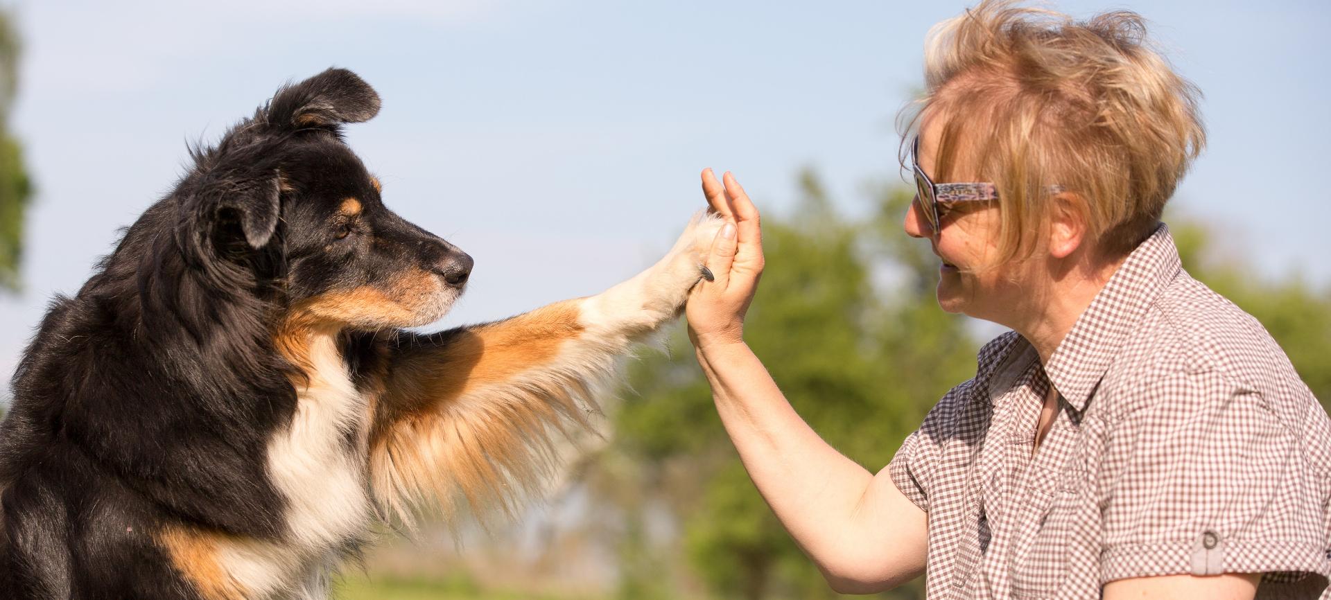Hundeschule Termin 2