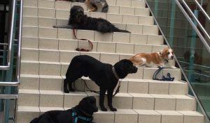 Schulhunde Modul 4 -ausgebucht-