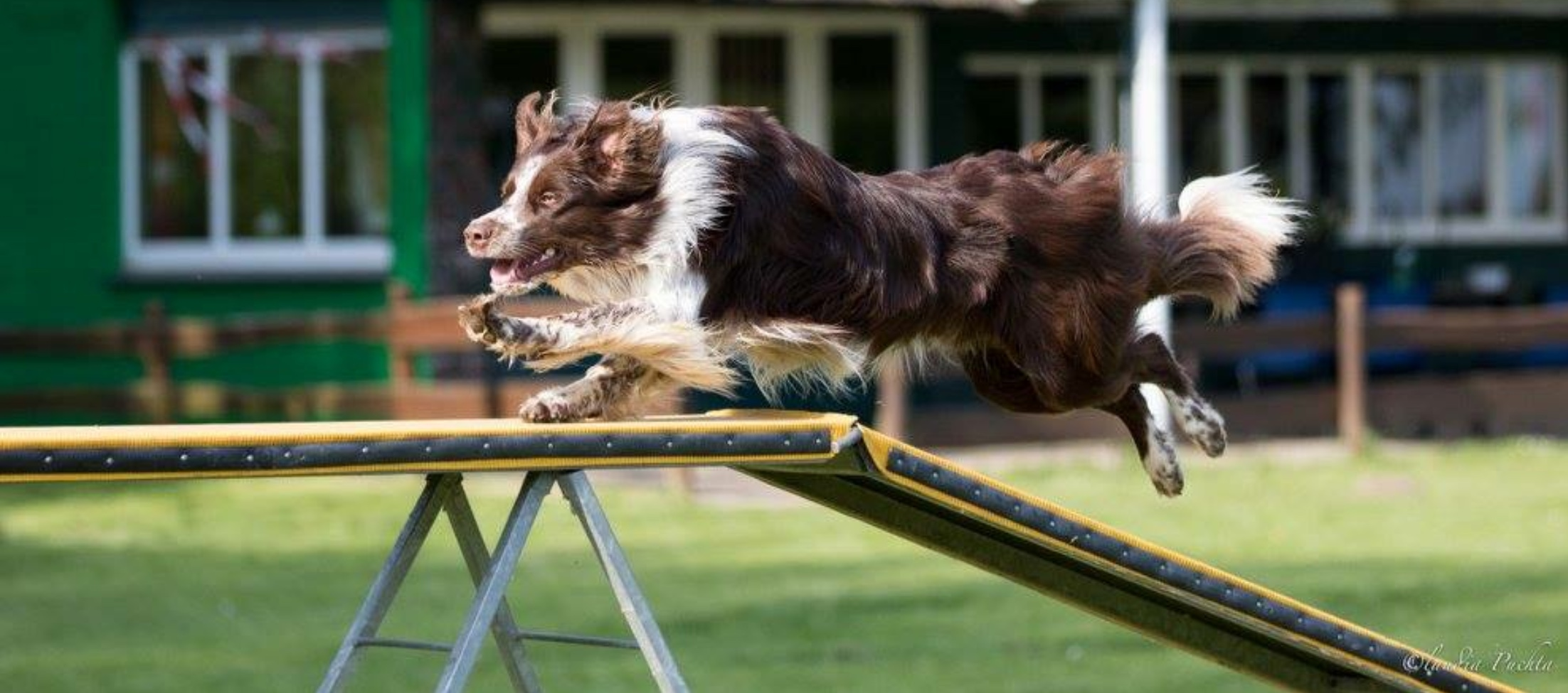 Agility Intensivtraining - large - mit Stephanie La Motte