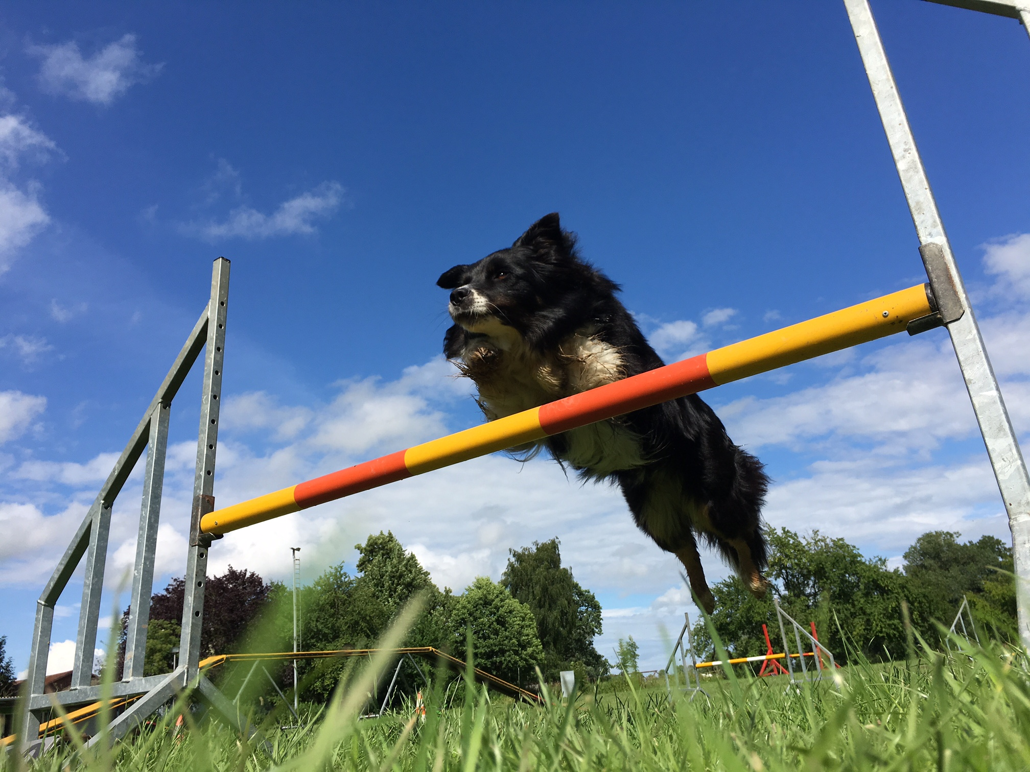 Agility Intensivtraining - small/medium - mit Stephanie La Motte