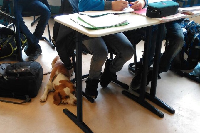 Schulhund V Modul 1