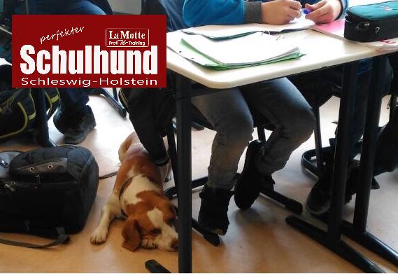 Schulhund X Modul 3