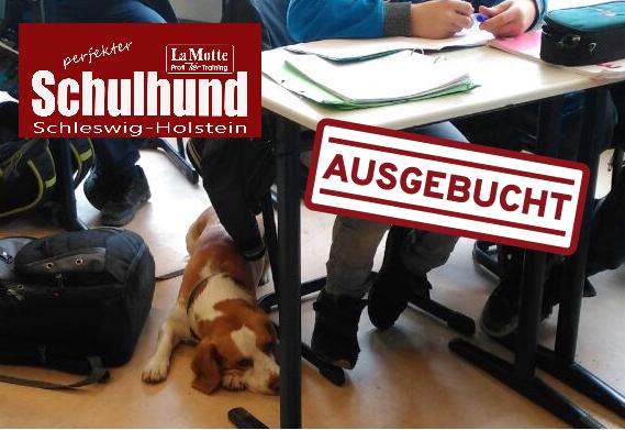 Schulhund IX Modul 4 - ausgebucht