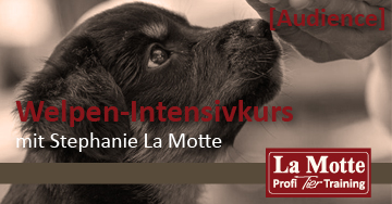 Welpen-Intensivkurs 11.20 mit Stephanie La Motte (Audience)