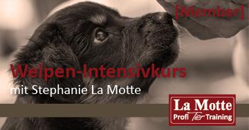 Welpen-Intensivkurs 11.20 mit Stephanie La Motte (Member)