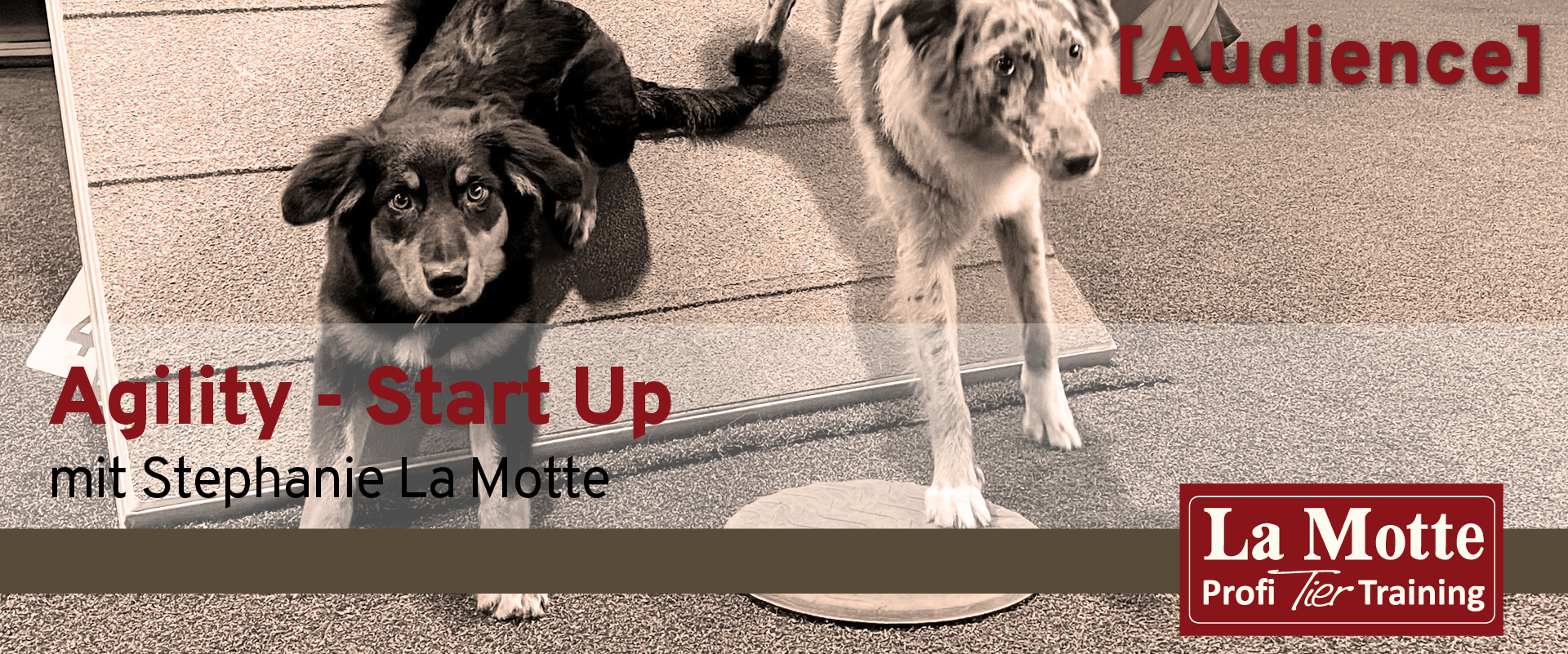 Agility - Start Up 02.21 mit Stephanie La Motte (Audience)
