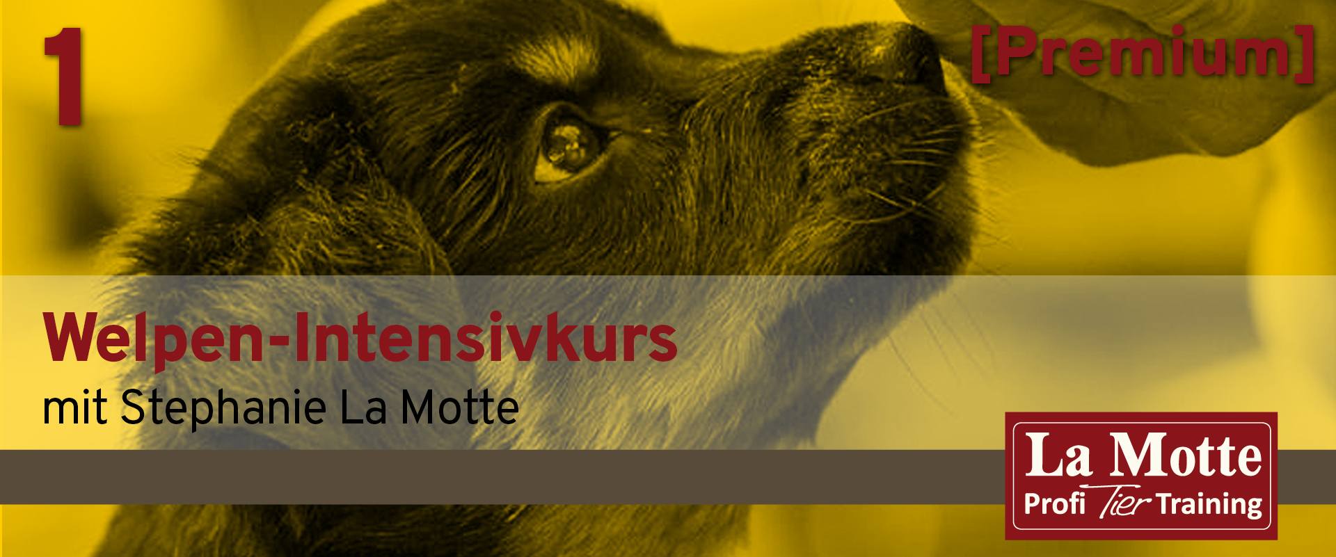 Welpen-Intensivkurs Teil 1 - 08.21 mit Stephanie La Motte (Premium)